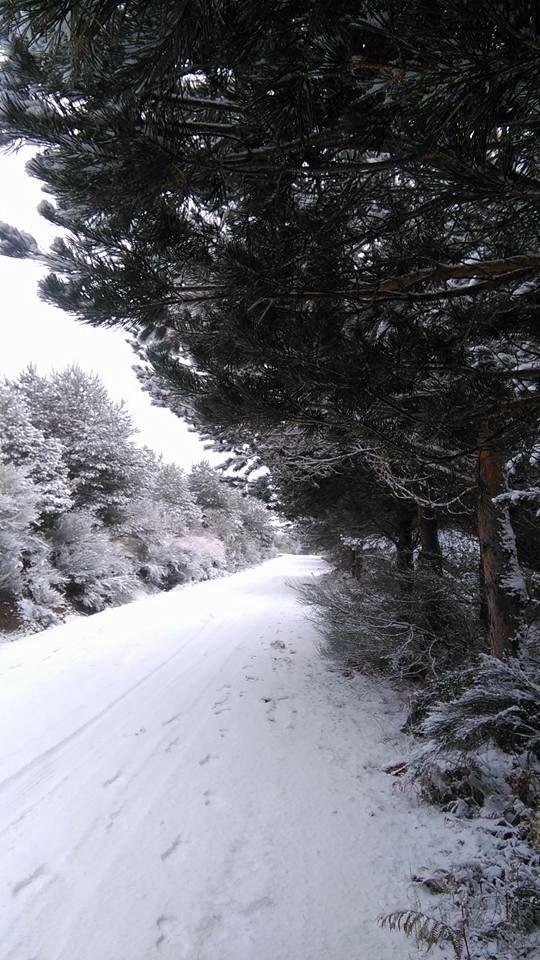 Nieve, frio, invierno, recogimiento