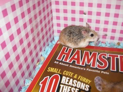 I'm on the cover of Hamster Magazine!