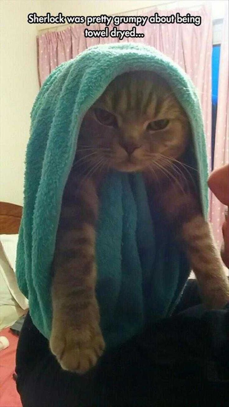 17 Funny Animal Picture Dump