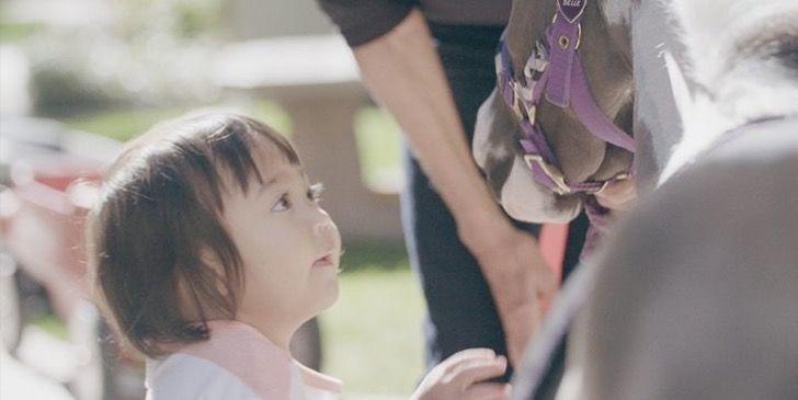 Estos caballos miniatura están entrenados para ayudar a personas que lo necesitan gracias a su dueña