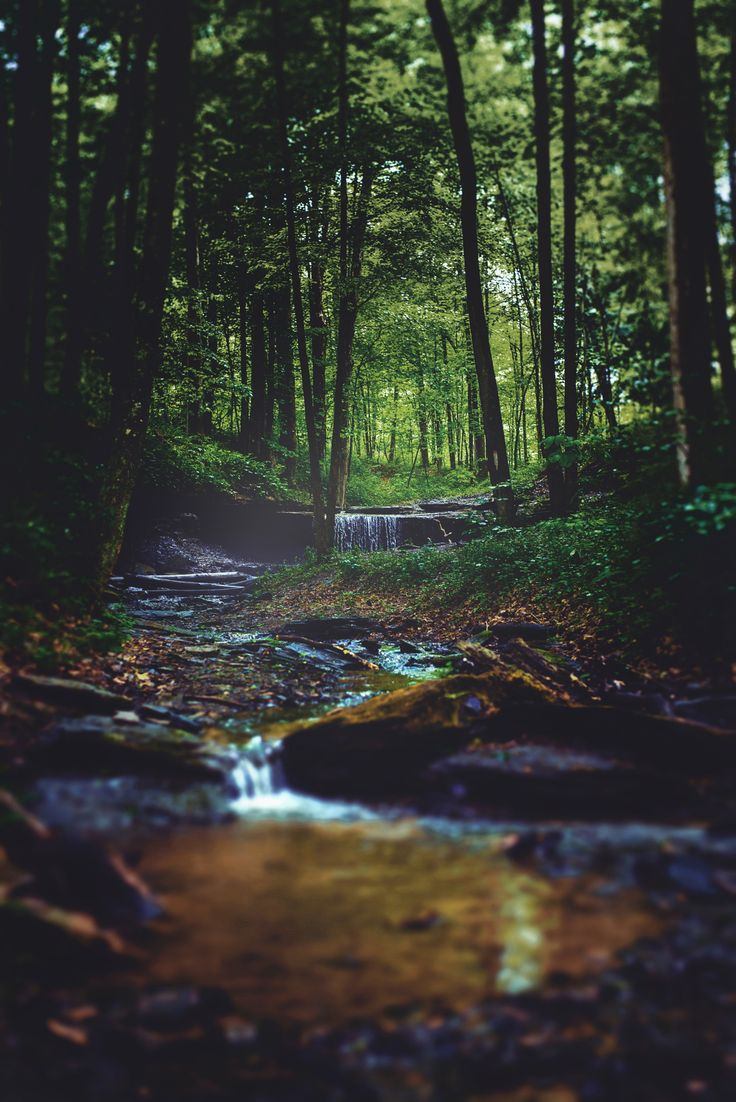 Small Creek in the Forest - I took a new shot at editing this image, which ended…