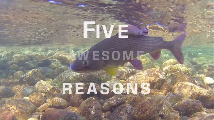 5 Reasons Why Fly Fishing Is Special