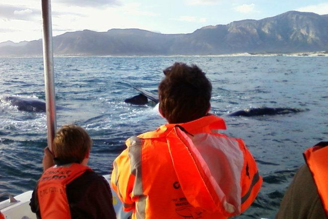 A close up view of the whales on a boat ride in Hermanus