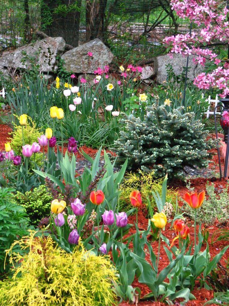 我爱我家:花园趣事:后花园的设计与效果 - 由Myflock发表 - 文学城