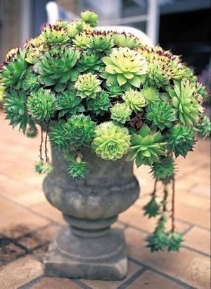 Succulents. I might have to try this.