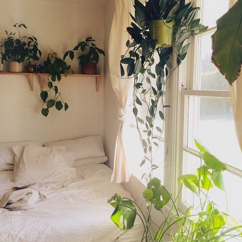 Green plants in the bedroom   The best of the best – Sweet little boho nest. Anything that drapes is a friend of ours. May suffer a leaf to the face while sleeping. May not care