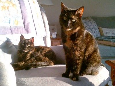 O9 reported that tortoiseshell cats cannot be replicated, because parts of their genes simply aren't there anymore.