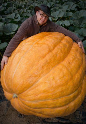 Agricultor orgulhoso exibe, na Alemanha, abóbora de 320 quilos  .