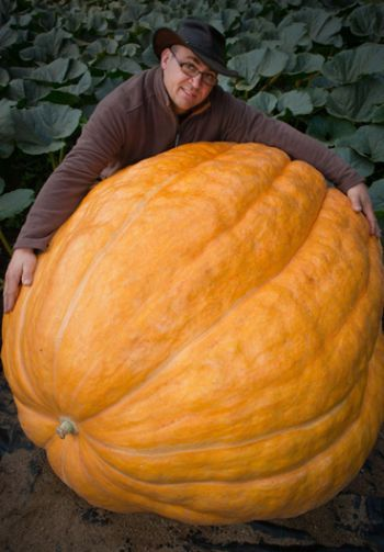 Agricultor orgulhoso exibe, na Alemanha, abóbora de 320 quilos |.