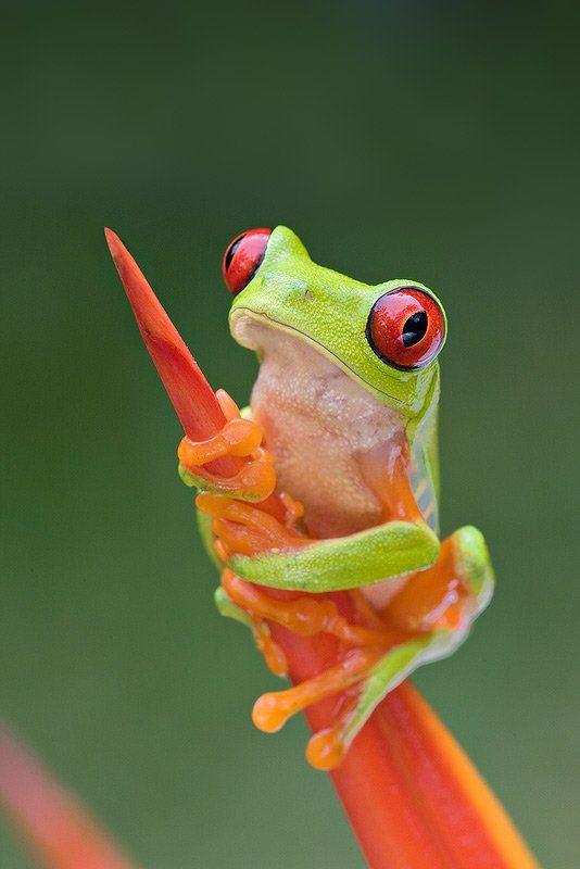 Ich will doch ein Frosch sein...