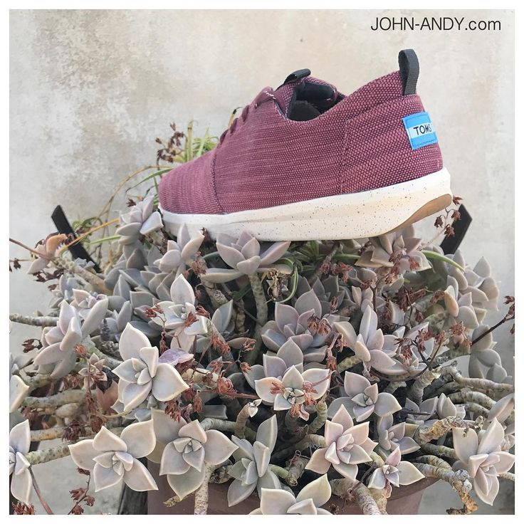 #johnandy #toms #sneakers #00302109703888  https://www.john-andy.com/gr/catalogsearch/result/?q=Toms+ανδρικα