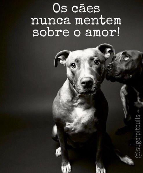 """O sentimento mais puro é o amor de um cão. Não é à toa que chamam seu amor de """"incondicional"""", sempre vemos casos de cachorros negligenciados que apesar de tudo amam seus donos; cães mau-tratados que perdoam e seguem amando pessoas; cães que esperam seus donos ansiosos todos os dias; cães que recebem seus donos quase que desesperados quando voltam de uma saída à padaria!  Eles amam e inegavelmente merecem todo amor e respeito em troca!! ❤️❤️❤️ https://instagram.com/sugarpitbulls/"""