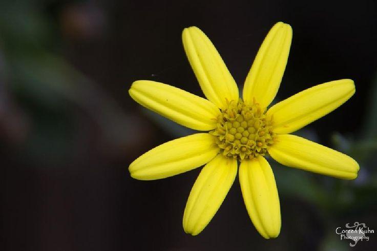 Beautiful flowers by CoreenKuhnPhotography
