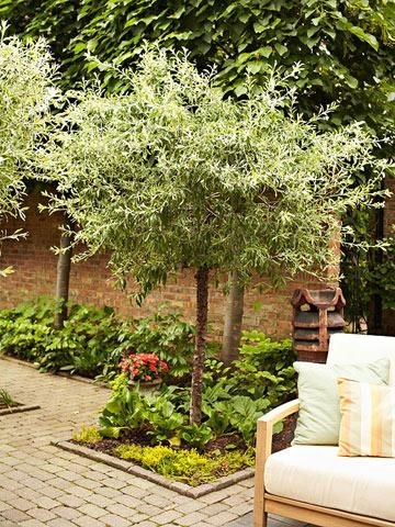 89 best pretty porches outdoor spaces images on Small flowering trees
