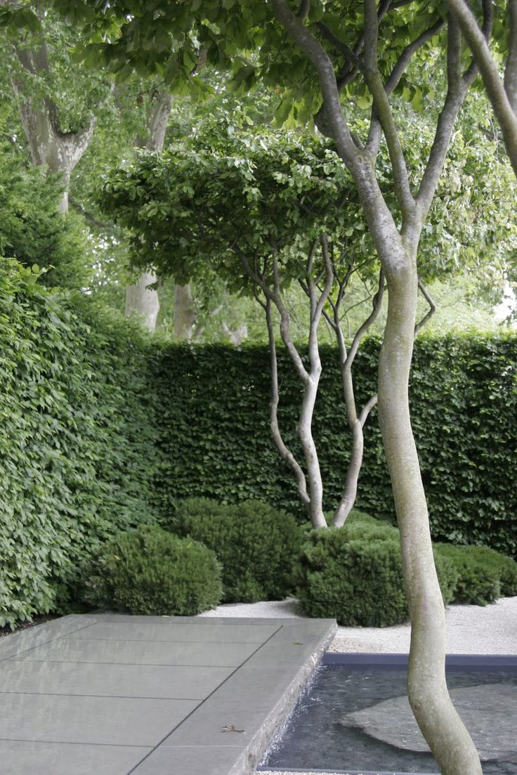 Designed by Luciano Guibellei, The planting included crown lifted multi stemmed Parrotia Persica trees // Great Gardens & Ideas //