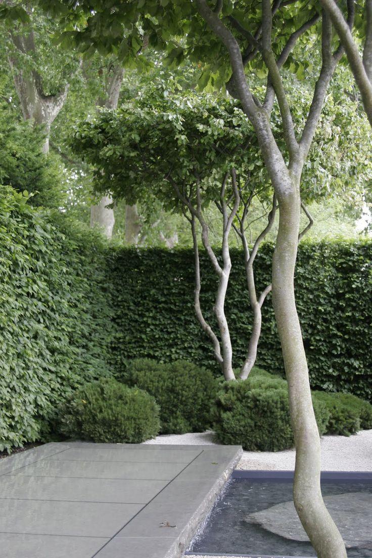 Designed by Luciano Guibellei, The planting included crown lifted multi stemmed Parrotia Persica trees. Mooi, misschien zijn er ook groenblijvende meerstammige bomen/struiken?