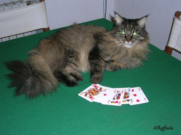 ...... Giocando a carte