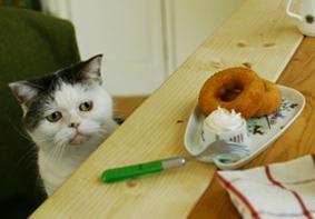 Sentimental sweets cat, mako