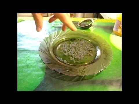 #Проращивание #семян по новому методу. Вода и мед. - YouTube