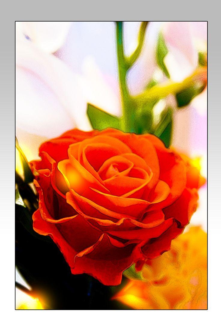 Red flower - Ruusukortti