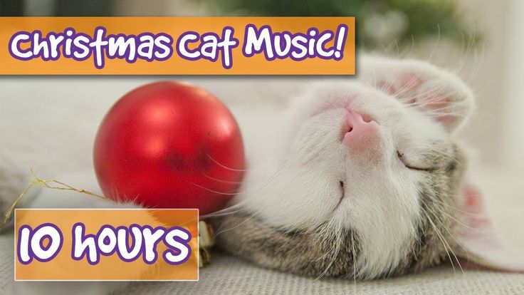 The Best Christmas Therapy Music for Cats! Calming Music for Cats with C...