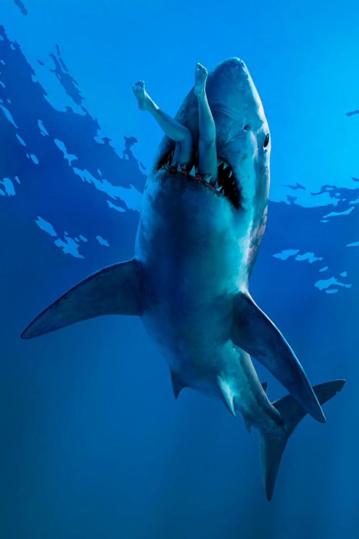 best images ~Sharks~ Swim Great white