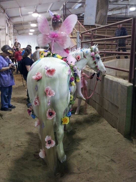 Horse costume Cowgirl fairies: flowers on halter with enchanted unicorn theme