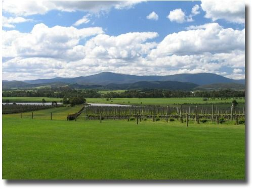 Yarra Valley Wineries in Melbourne Australia