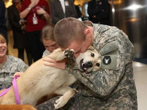 missed u dad!: Animal Shelters, Heroe, Heart, Soldiers, Dogs, Best Friends, Pet, Pure Joy, Welcome Home