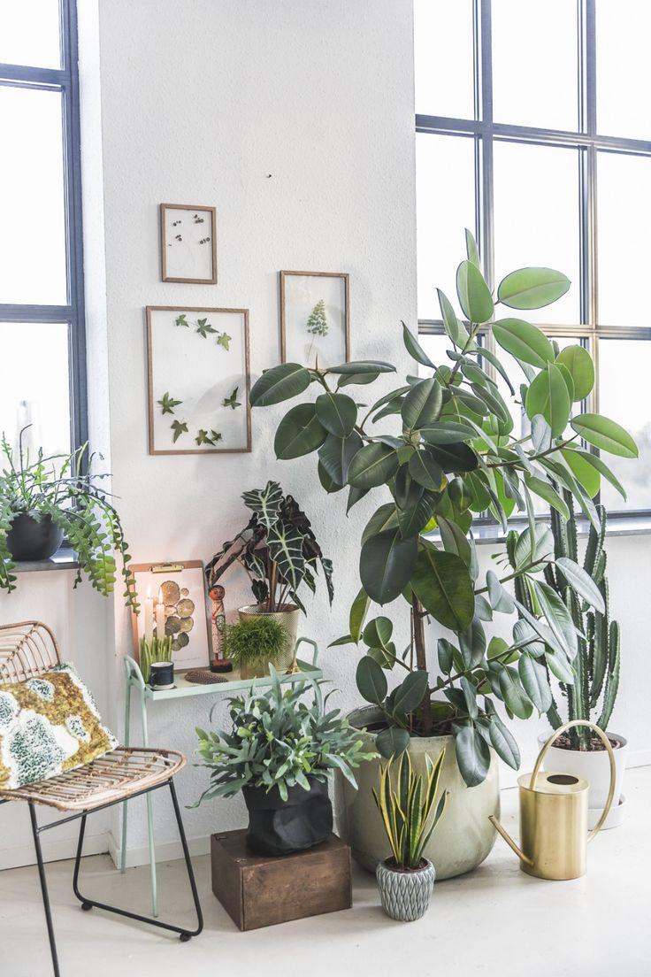 Ihre ganz pers nliche pflanzenecke pflanzen im raum for Raum pflanzen