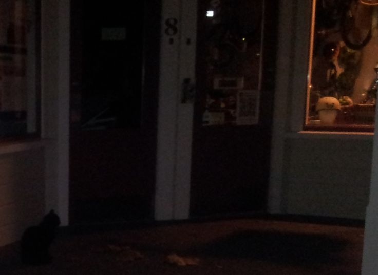 this nearly broke my heart,  i arrived back at the shop late, after delivering an ecycle, and there shop cat was.