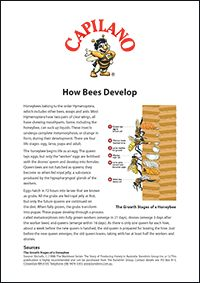 How Bees Develop #beekeeping #facts #honey