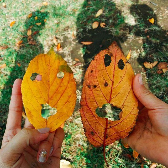 子供と一緒に簡単ほっこり落ち葉アート 秋を楽しむアイディアまとめ 散歩 落ち葉 秋 おでかけ 工作 簡単 はらぺこあおむし インスタ映え 公園 子ども 親子 手作り 木の実 紅葉 芸術の秋 落ち葉アート 自然 落ち葉 アート 落ち葉 紅葉 落ち葉
