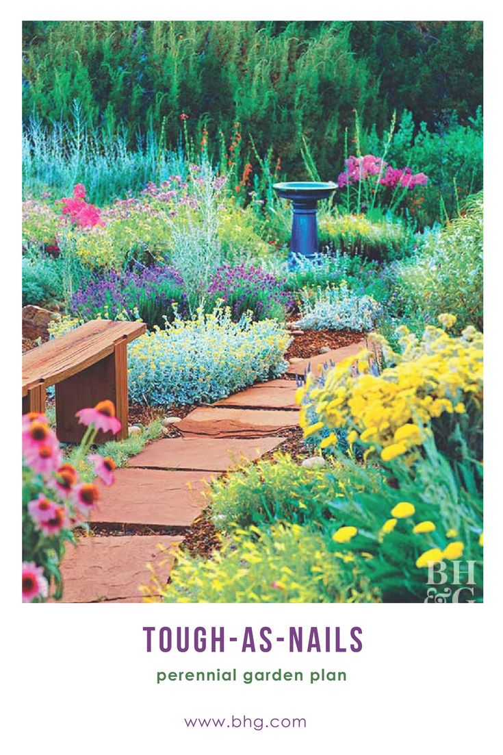 Plant it and (ALMOST) forget it! Fill your garden with these tough-as-nails perennials that come back year after year. Even then, they need little more than the occasional tidying up. #garden #perennials #gardenflowers #perennialgardenplanning