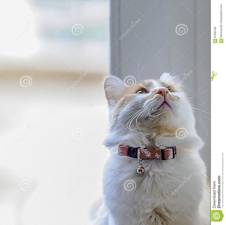 Kitty Cat - Download From Over 58 Million High Quality Stock Photos, Images, Vectors. Sign up for FREE today. Image: 87892792