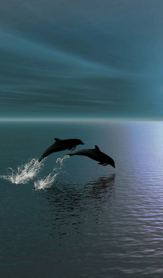 Dolphins Jumping. I am in love with everything about this picture. It makes my heart cry..I want to be on the ocean so bad. :'(