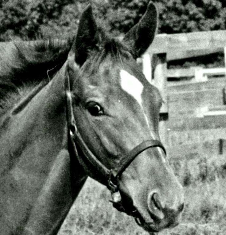 Secretariat as a foal. He's just a baby...:)