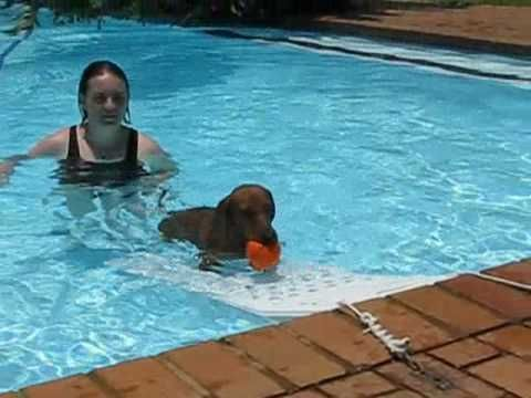 A pool ramp for dogs can help your dog easily enter and