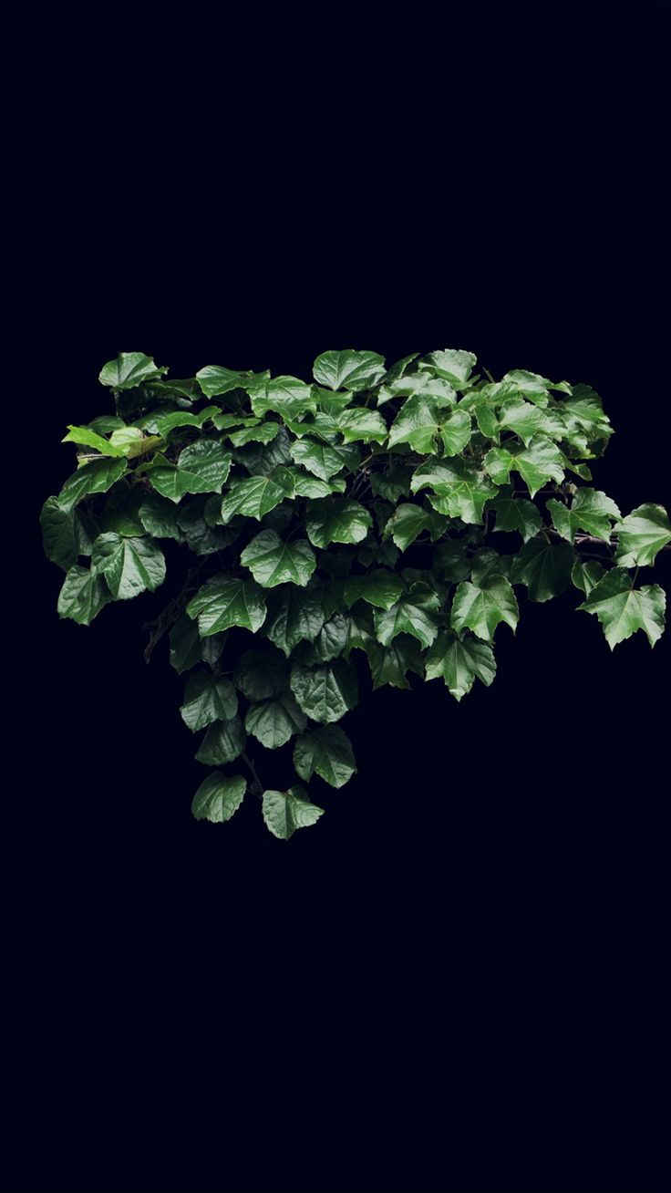 Truevine Dark Nature Green Flower Leaf