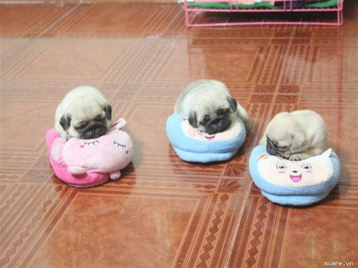 baby pugs. The noise I just made on seeing this photo was a definite squeeeeeeeeeeee