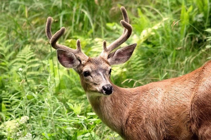 Deer Photo by Paul Yates -- National Geographic Your Shot