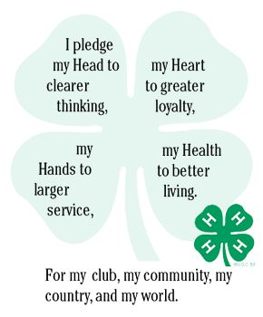 4-h pledge clover...4H taught me so much!!!