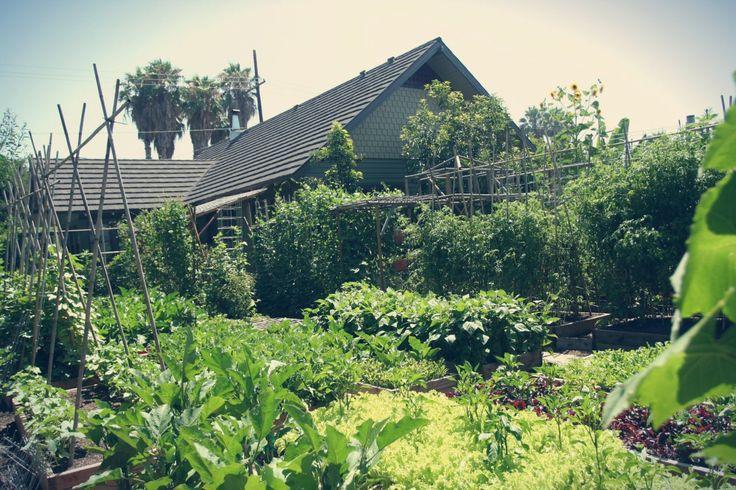 A horta urbana mais produtiva do mundo