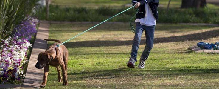 Γιατί ο σκύλος σου τραβάει το λουρί στην βόλτα. #DimitrisKotakos