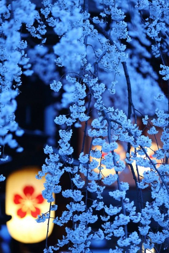 CHERRY BLOSSOM FESTIVAL IN KYOTO, JAPAN BY ARTIST UNKNOWN. Kyoto is one of the most beautiful cities in the world!! #japanese #art SEE MORE AET NOW www.richard-neuman-artist.com