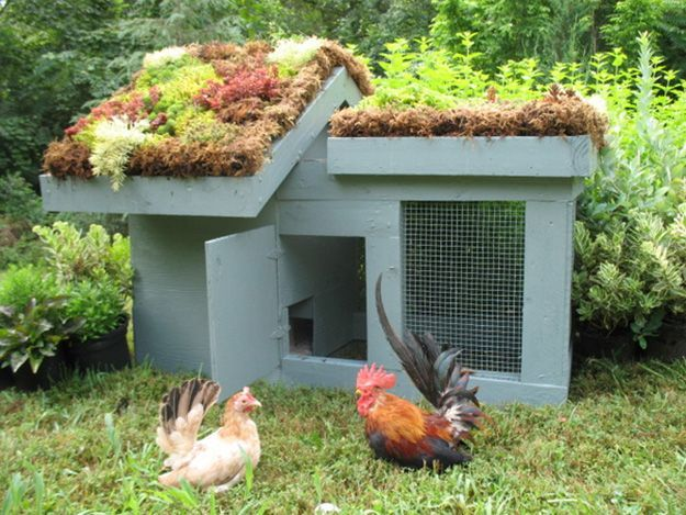 21 awesome chicken coop designs and ideas how to build easy and creative home for - Chicken Coop Design Ideas