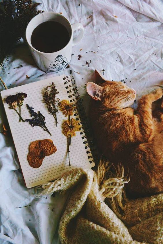 Zuhause süßes Zuhause Gemütlich | Kaffee | Herbst | Stimmung | Katze | Schläfrig