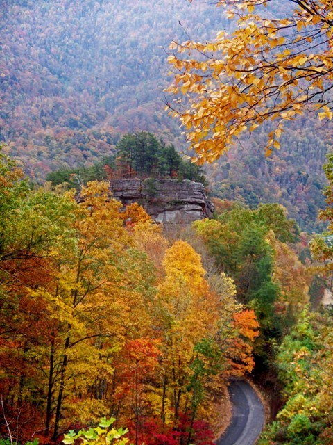 On Laden Trail, south side of Pine Mountain just above Rebel Rock, Harlan County, Kentucky