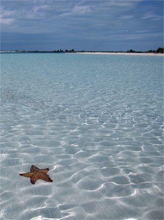 Paradise Beach, Cayo Largo Com'è: siamo a sud di Cuba il mare è azzurrissimo e degrada lentamente. C'è un piccolo bar con tavolini all'ombra e dune abitate d iguana. Intorno quasi nulla…almeno non di umano. Non mancano stelle marine, conchiglie bellissime e pesci variopinti. Sabbia: bianca e fine Servizi: un bar con noleggio ombrelloni e lettini Come si raggiunge: a piedi, in taxi, con lo scooter o il fuoristrada © Getty Images
