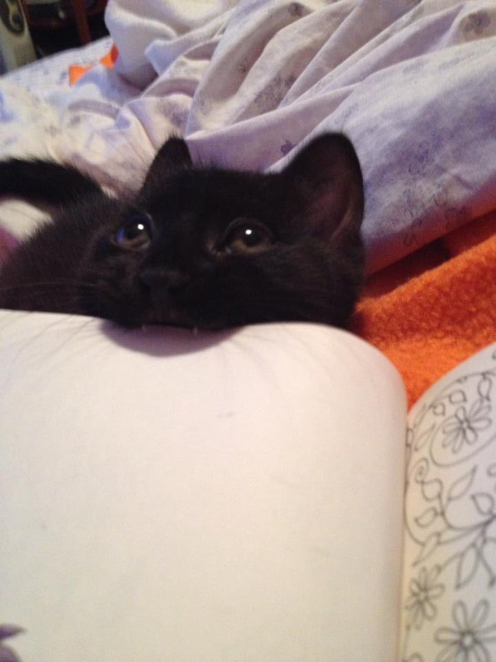 We recently adopted a couple of kittens. This one, Starbuck, enjoys chewing on books.